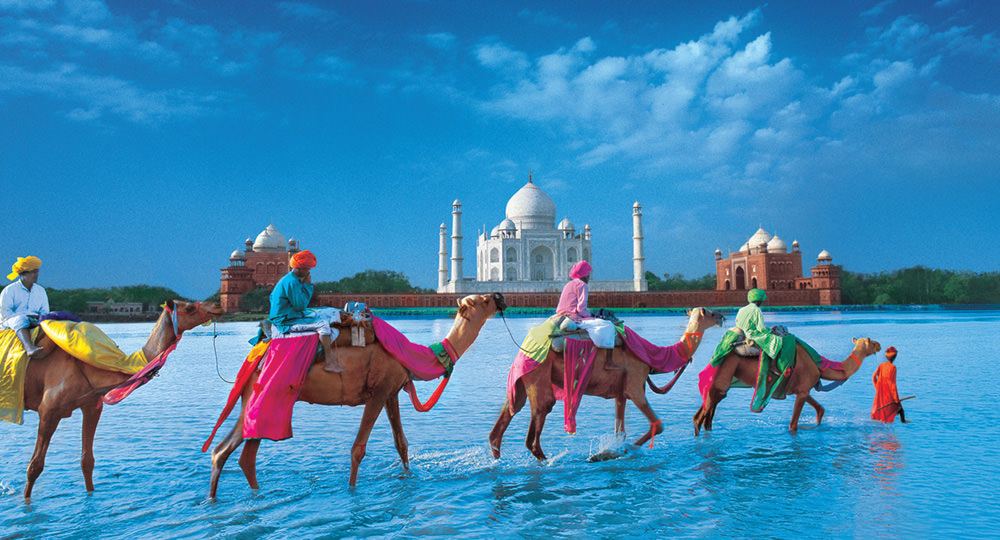 Camels in the Desert of India