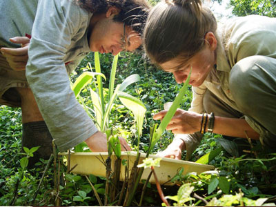 Volunteer in Sustainable Agriculture in Brasil